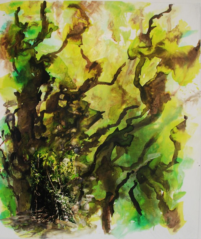Regenwalddetail29_2020